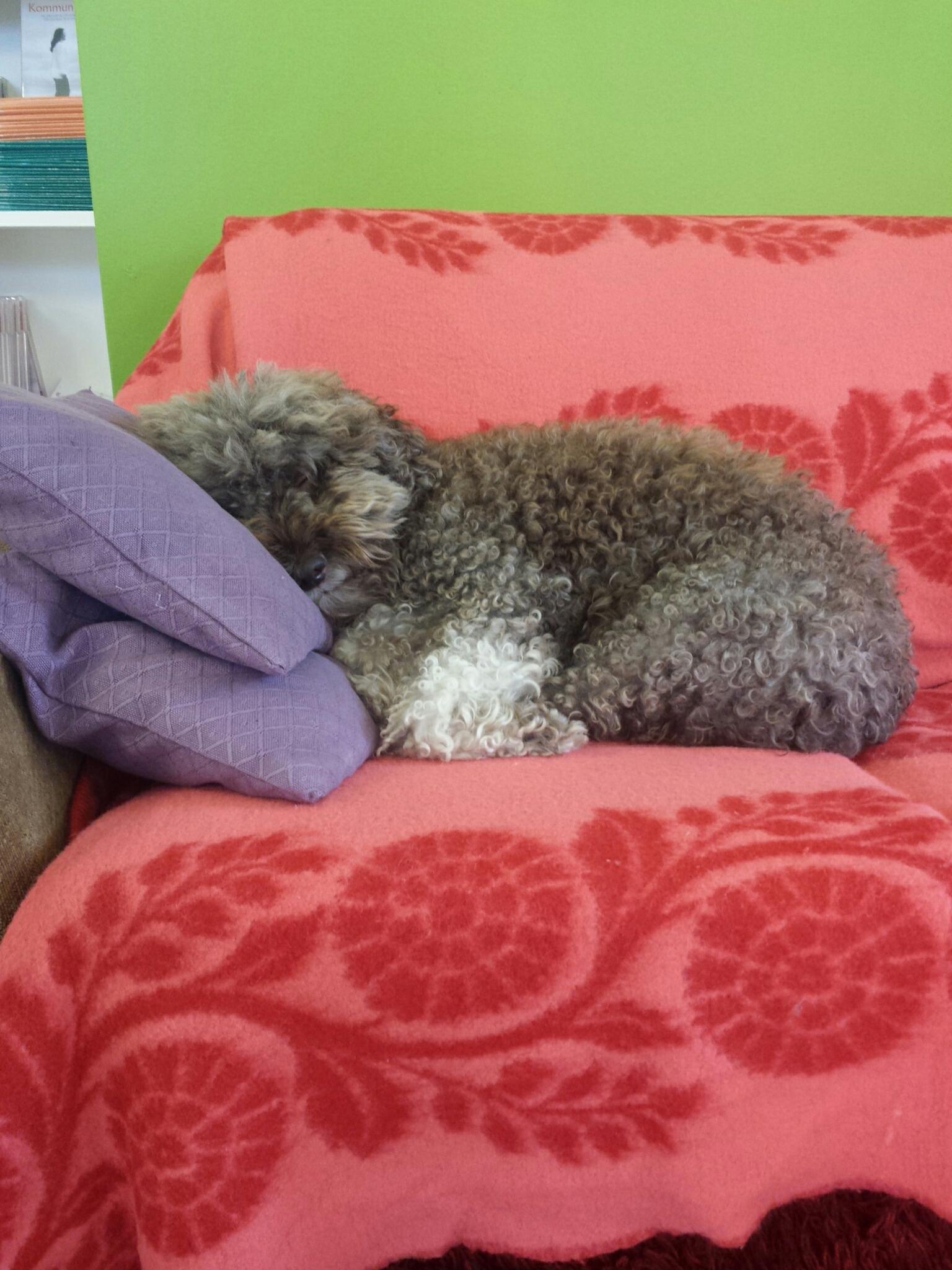 Alice vilar i soffan